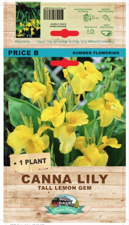 Picture of CANNA LILY - TALL LEMON GEM