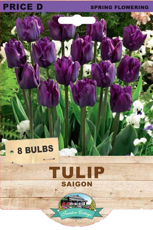 Picture of TULIP - SAIGON