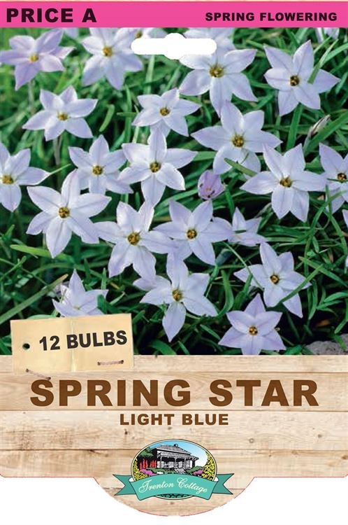 Picture of SPRING STARS - LIGHT BLUE