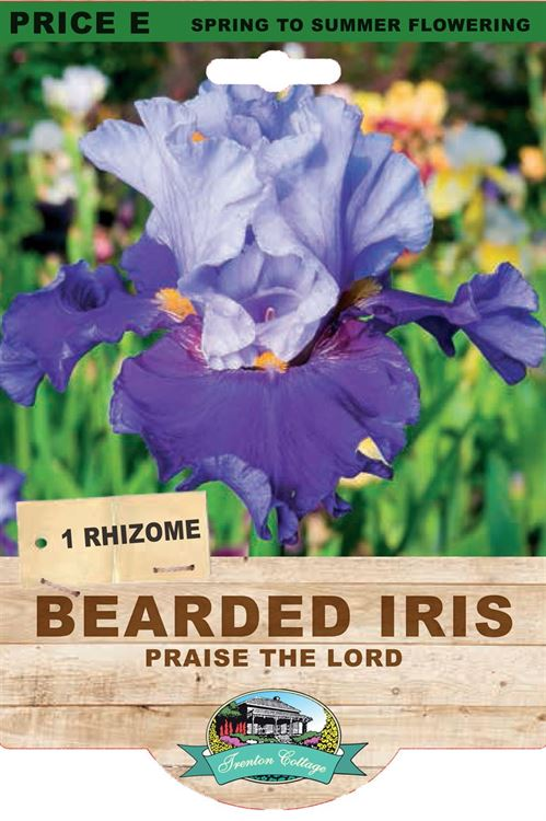 Picture of BEARDED IRIS - PRAISE THE LORD