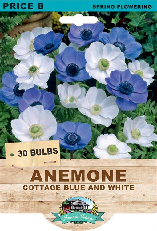 Picture of ANEMONE - COTTAGE BLUE & WHITE