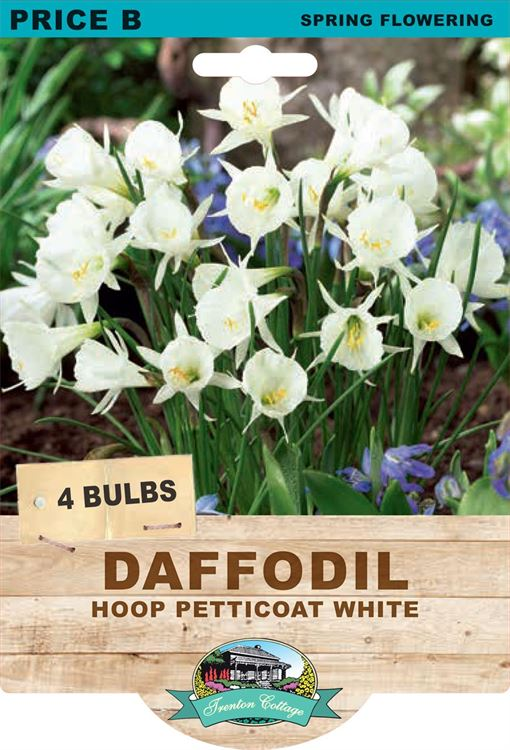 Picture of DAFFODIL - HOOP PETTICOAT WHITE