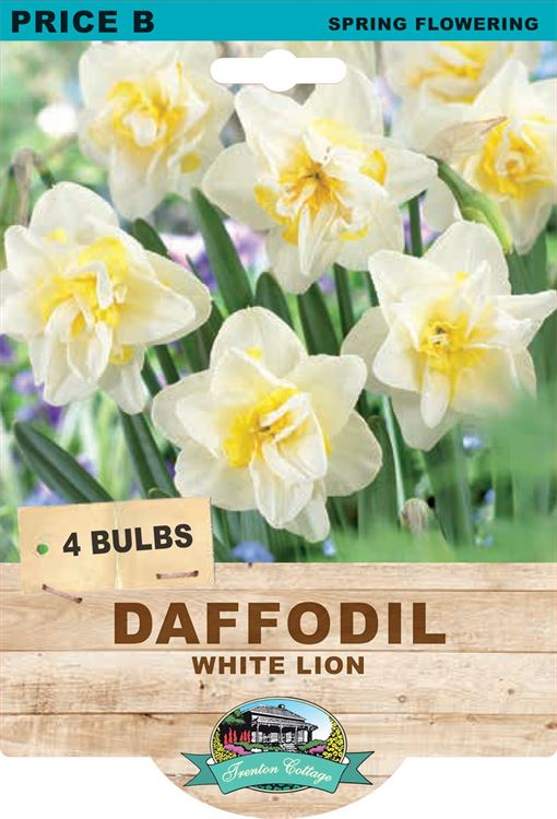 Picture of DAFFODIL - WHITE LION