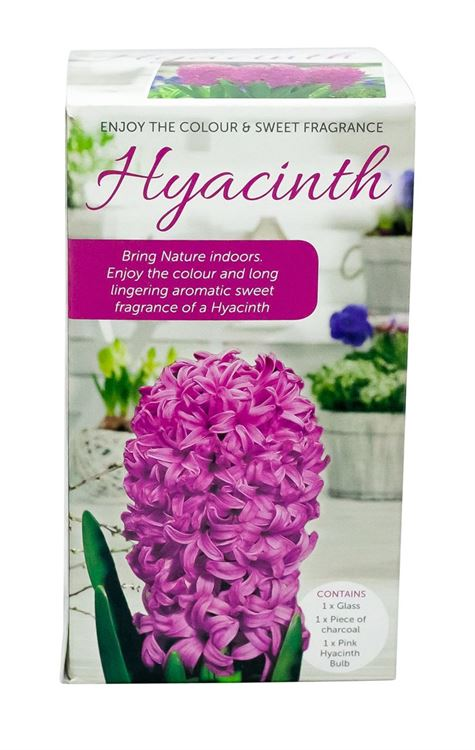 Picture of HYACINTH VASE KITS - PINK