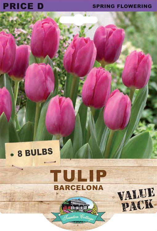 Picture of TULIP - BARCELONA