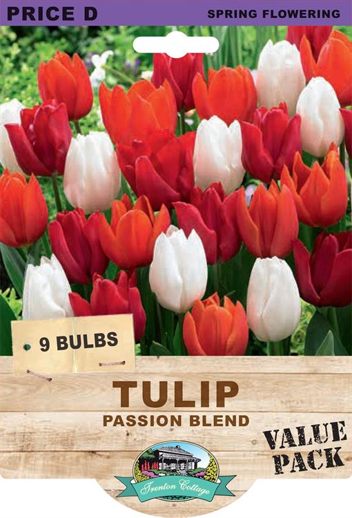 Picture of TULIP - PASSION BLEND