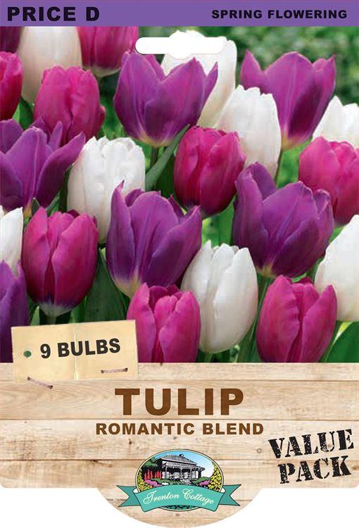 Picture of TULIP - ROMANTIC BLEND