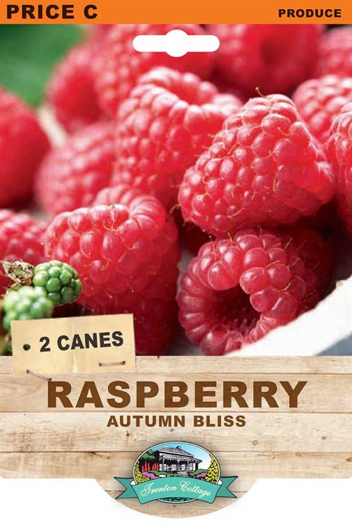 Picture of RASPBERRY - AUTUMN BLISS