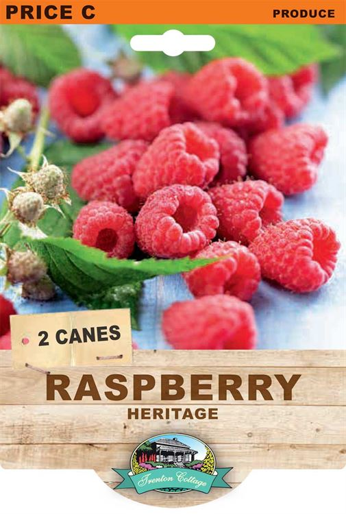 Picture of RASPBERRY - HERITAGE