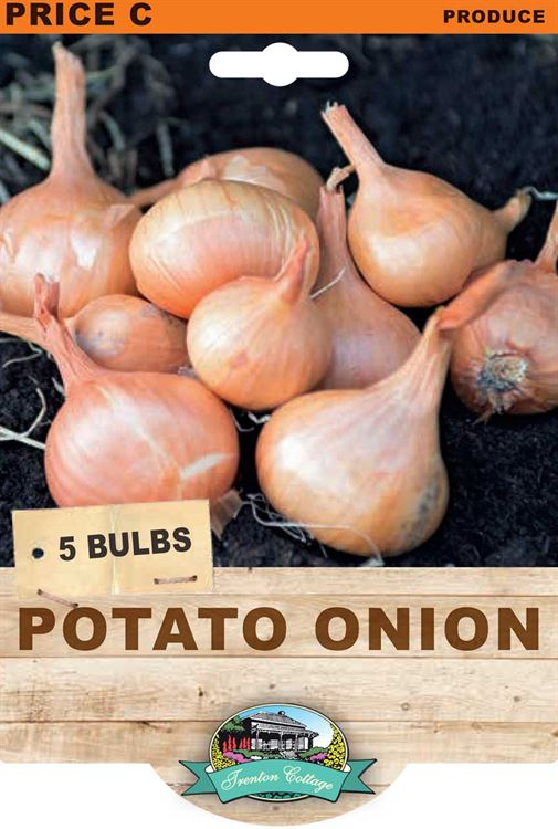 Picture of POTATO ONION