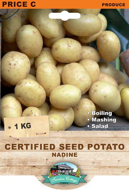 Picture of CERTIFIED SEED POTATO - NADINE