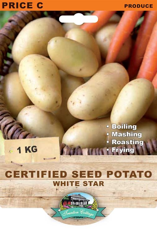 Picture of CERTIFIED SEED POTATO - WHITE STAR