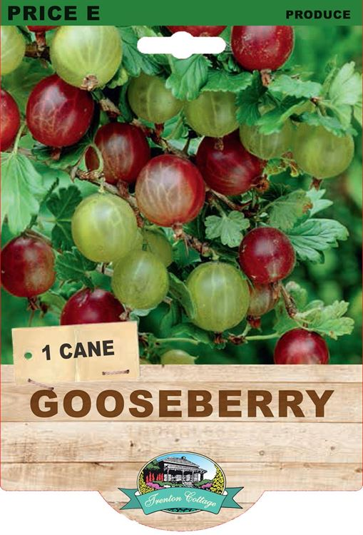 Picture of GOOSEBERRY