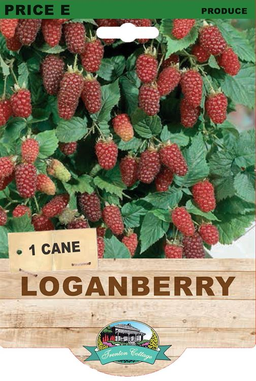 Picture of LOGANBERRY