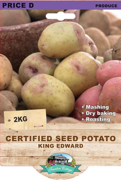 Picture of CERTIFIED SEED POTATO - KING EDWARD