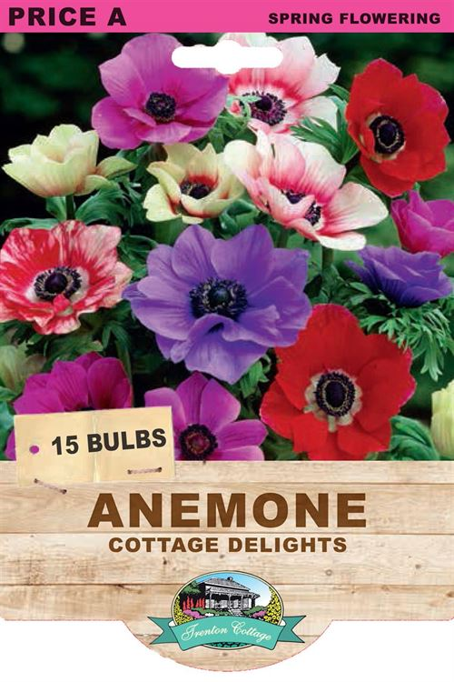Picture of ANEMONE - COTTAGE DELIGHTS