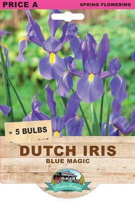 Picture of DUTCH IRIS - BLUE MAGIC