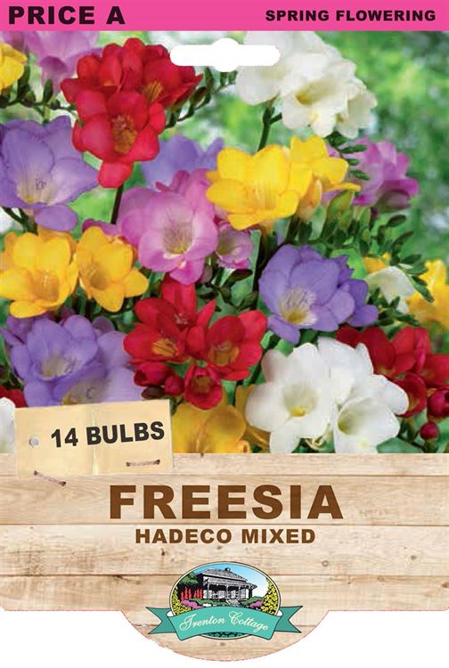 Picture of FREESIA  - HADECO MIXED