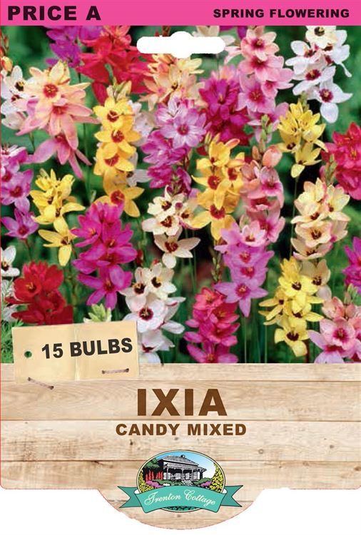 Picture of IXIA - CANDY MIXED