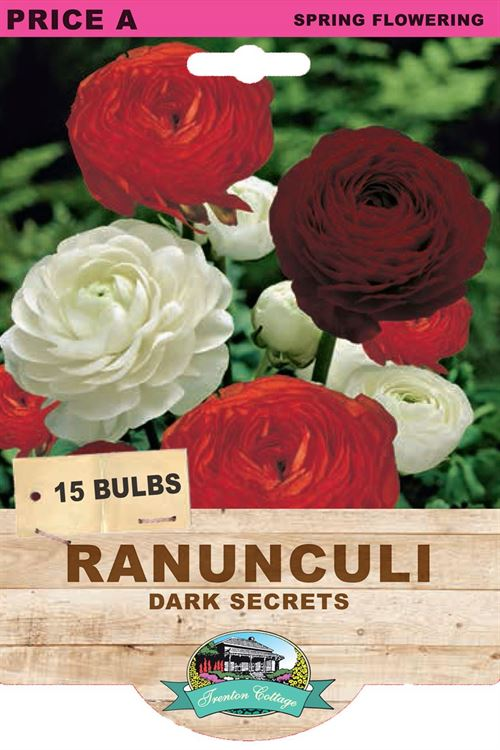 Picture of RANUNCULI - DARK SECRETS