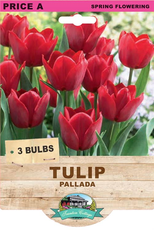 Picture of TULIP - PALLADA