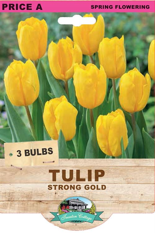 Picture of TULIP - Strong Gold