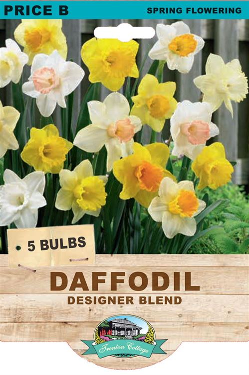 Picture of DAFFODIL - DESIGNER BLEND