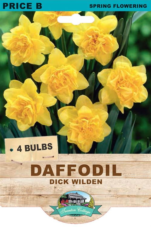 Picture of DAFFODIL - DICK WILDEN