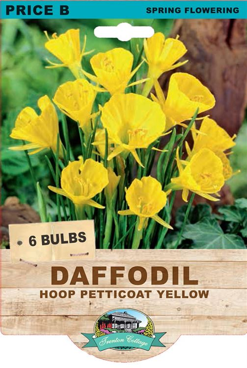 Picture of DAFFODIL - HOOP PETTICOAT YELLOW