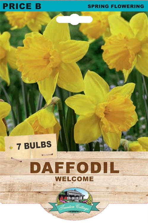Picture of DAFFODIL - WELCOME