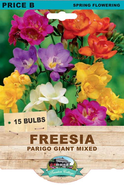 Picture of FREESIA  - PARIGO GIANT MIXED