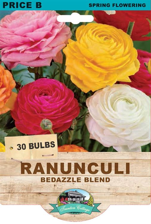 Picture of RANUNCULI - BEDAZZLE BLEND