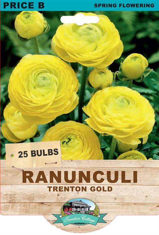 Picture of RANUNCULI - TRENTON GOLD
