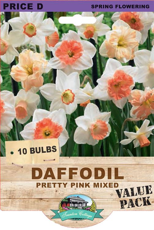 Picture of DAFFODIL - PRETTY PINK MIXED