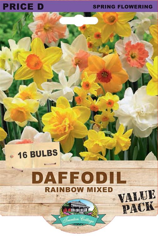 Picture of DAFFODIL - RAINBOW MIXED