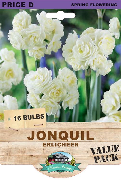Picture of JONQUIL - ERLICHEER