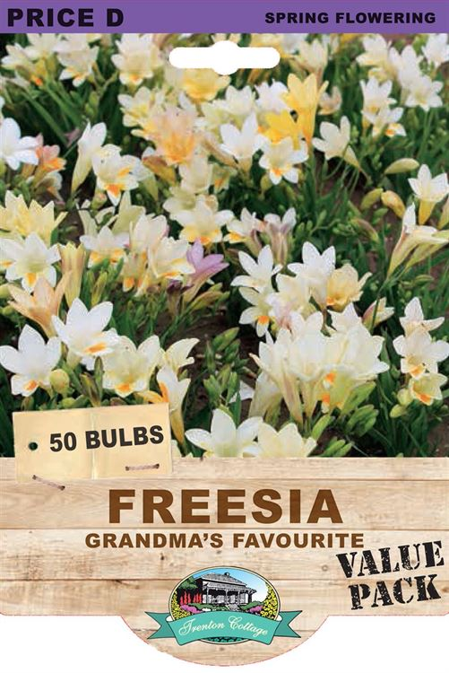 Picture of FREESIA  - GRANDMA'S FAVOURITE