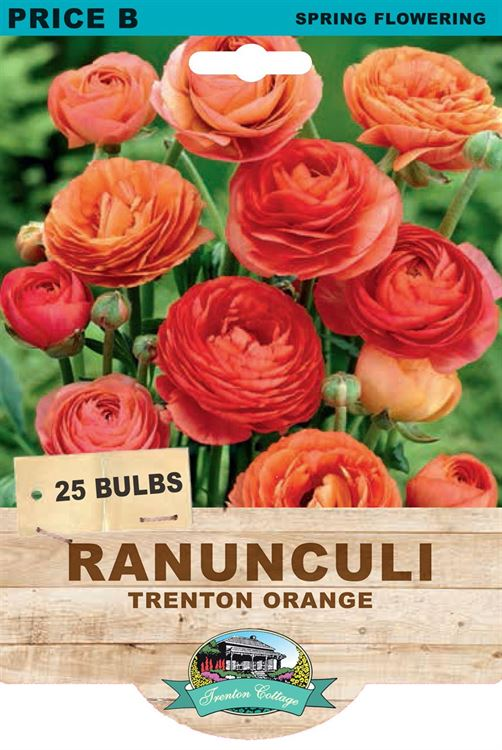 Picture of RANUNCULI - TRENTON ORANGE