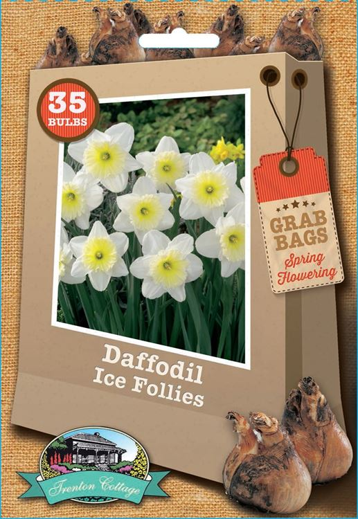 Picture of DAFFODIL - ICE FOLLIES