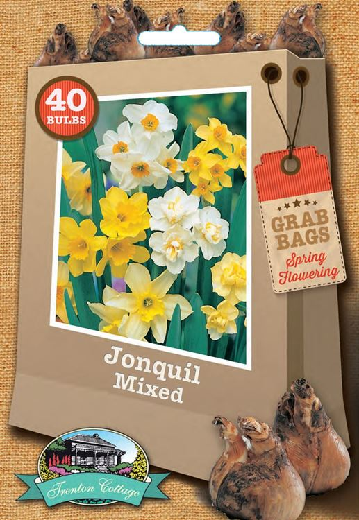 Picture of JONQUIL - MIXED