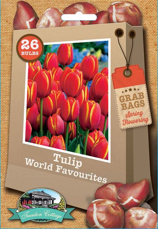 Picture of TULIP - WORLD FAVOURITES