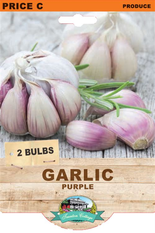Picture of GARLIC  - PURPLE
