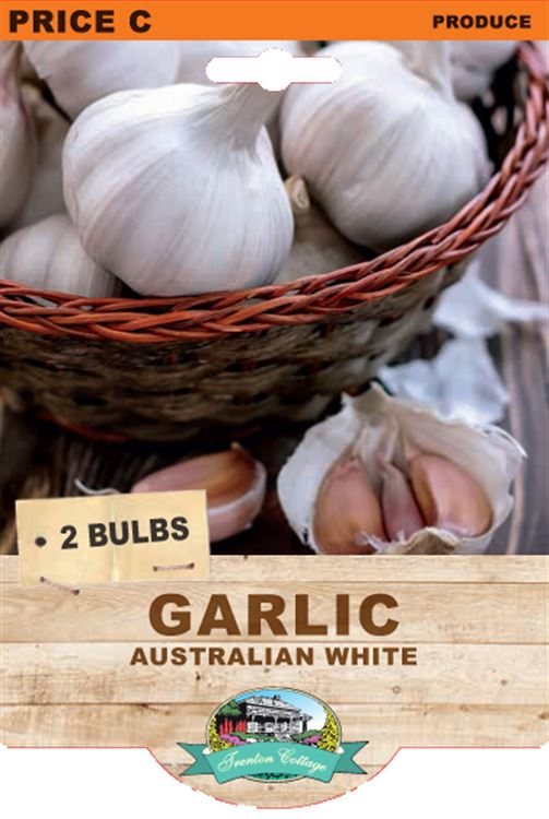 Picture of GARLIC  - AUSTRALIAN WHITE