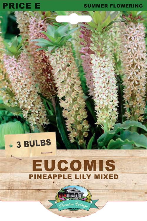 Picture of EUCOMIS - PINEAPPLE LILY MIXED
