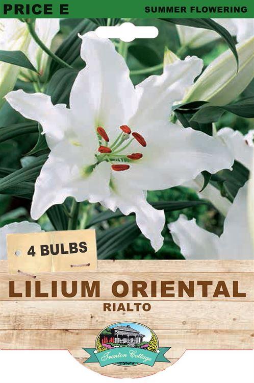 Picture of LILIUM ORIENTAL - RIALTO