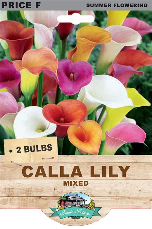 Picture of CALLA LILY - MIXED