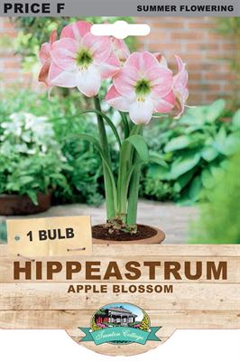 Picture of HIPPEASTRUM - APPLE BLOSSOM