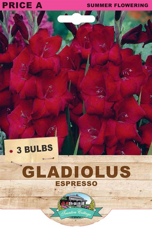 Picture of GLADIOLUS - ESPRESSO