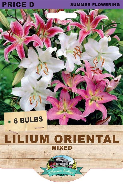 Picture of LILIUM ORIENTAL - MIXED