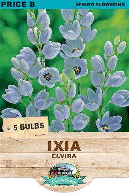 Picture of IXIA - ELVIRA